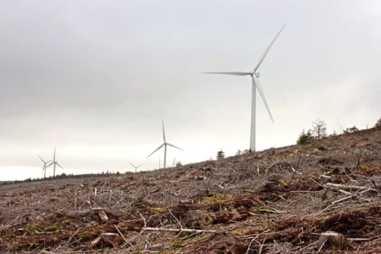Image of wind farm in Clashindarroch Forest (please credit Wildcat Haven)
